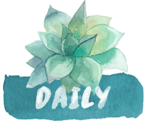 daily-flower