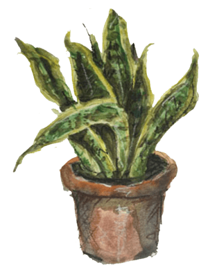 plant-painting