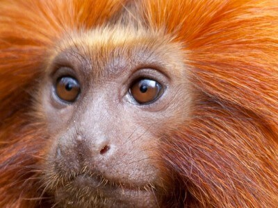 monkey lunar new year