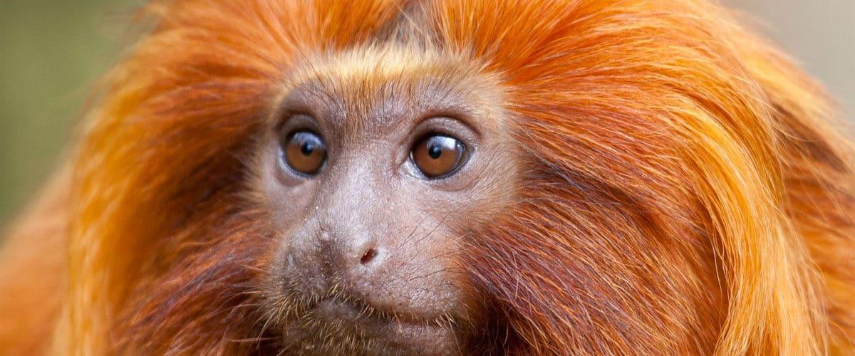 Monkey Weekly Horoscope